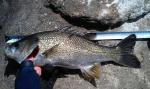 40cm Bass