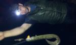 night eel