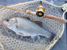 Brissy River Bass