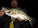 Bremer bass