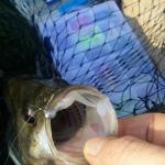 sweetwaterfishing.