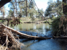 Dumaresq River