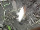 little fish