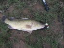 smashed surface lure just after heavy rain